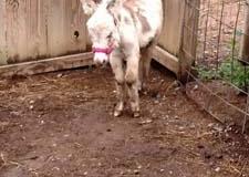 donkey-taco
