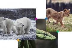 home_zoo_pic2